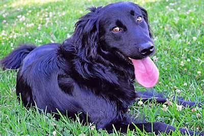 emergency vet dog