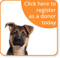 register as dog blood donor