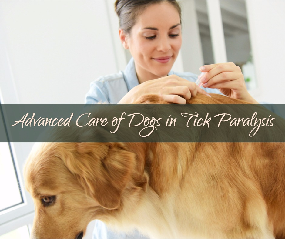 advanced-care-of-dogs