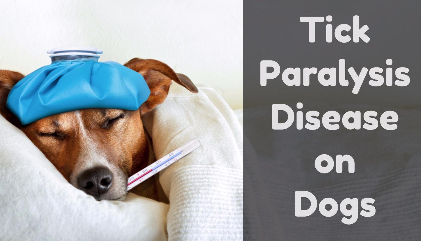 tick-paralysis-disease-on-dogs