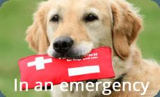 emergency after hours vet