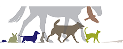 Belrose Veterinary Hospital Logo