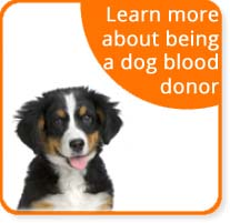 dog blood donor program