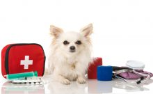 Pomeranian dog siting near medical equipments