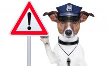Pet Dog weraing Police hat holding a warning sign