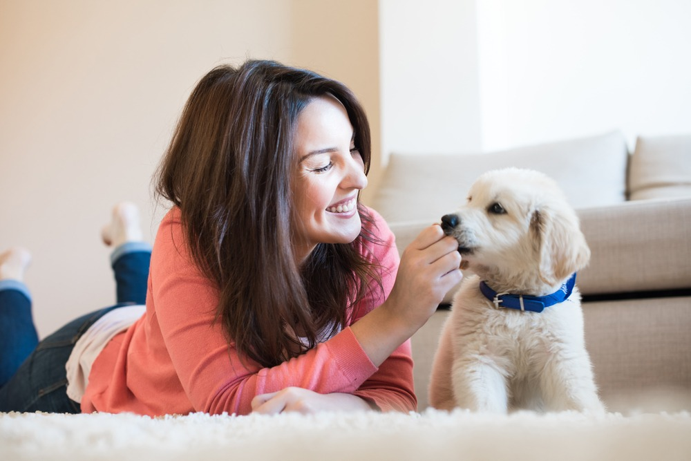 Young girl smiling and feeding white puppy in living room