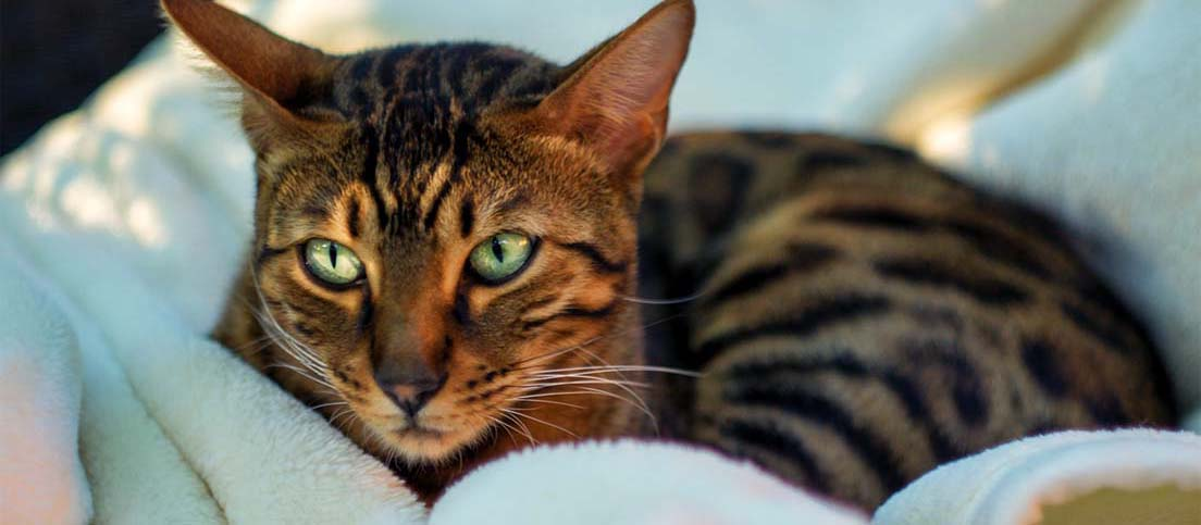 close up image of a cat
